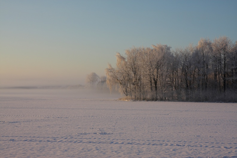 Winternebel